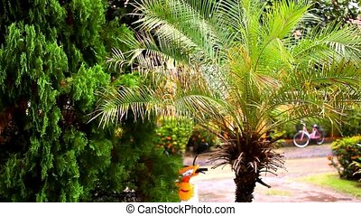 Rainy season in the tropical region. Palm tree in the wind. Video shift motion