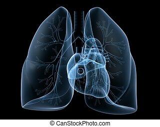 raio x, coração, e, pulmão