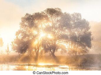 raios, silueta, árvore, sol, nevoeiro, através, alvorada
