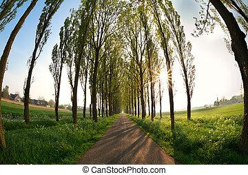 raios sol, através, árvore, filas, sobre, bicicleta, estrada