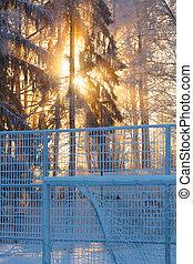 raios sol, através, gelado, árvores