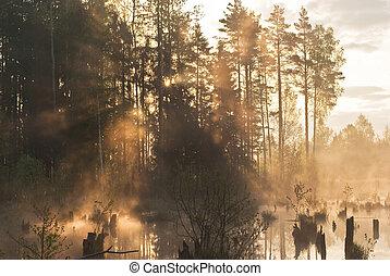 raios sol, em, a, primavera, madeiras