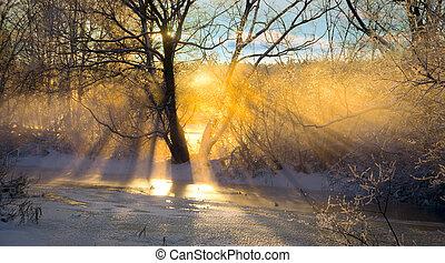 raios sol, filtrado, através, árvore nua