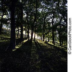 raios sol, floresta