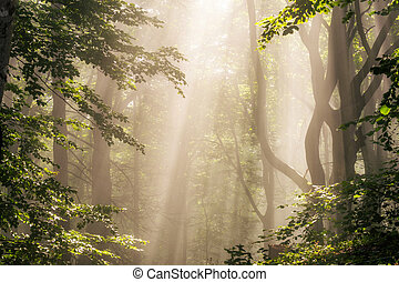 raios sol, floresta, manhã