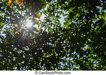 raios, sol, folhas, floresta verde, mais claro