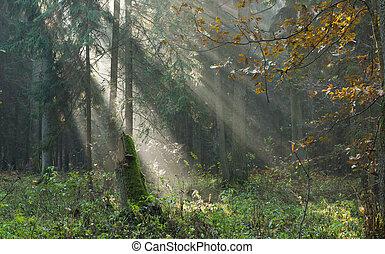 raios sol, névoa, outonal, levantar