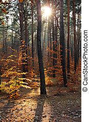 raios sol, outonal, floresta