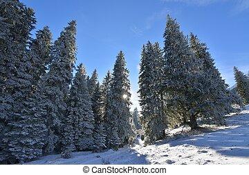 raios sol, pôr do sol, inverno, floresta
