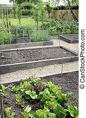 Raised beds in a garden, growing vegetables