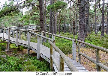 Raised platform nature trail bridge in the Cairngorms...