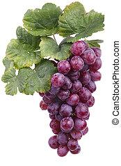 raisin, vin, rouges, isolé