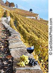 raisins, région, vignoble, terrasse, branche, suisse, vin, rouges, lavaux