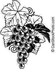 raisins, sur, vigne