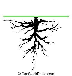 raiz árvore