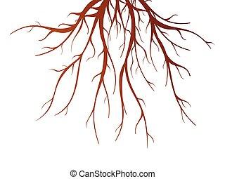 raiz árvore, isolado, ilustração