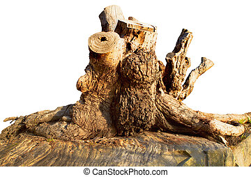 raiz árvore, madeira