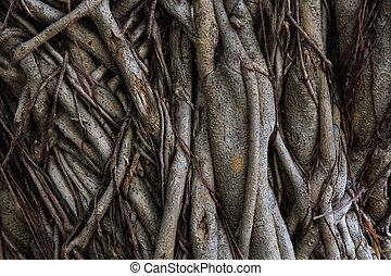 raiz, de, árvore