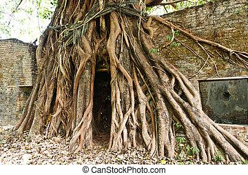 raiz, de, árvore velha