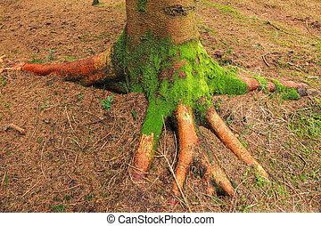 raiz, de, um, árvore