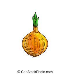 raiz, isolado, vegetal, bulbo, cebola, esboço