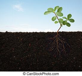 raizes, de, um, planta