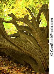 raizes, em, queda, madeiras, 2