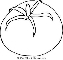 rajče, nahý, (vector), rukopis