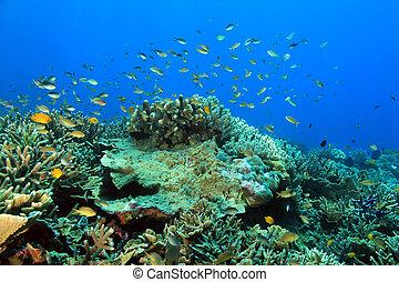 raja, coral, ampat, arrecife