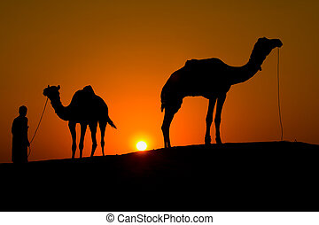 Rajasthan village. Silhouette of a man and two camels at...
