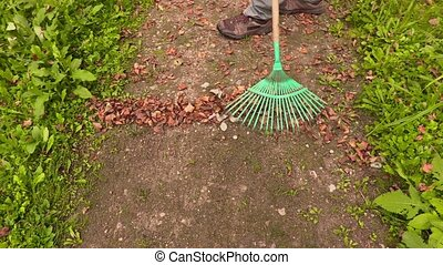 Rake collect leaves on the path