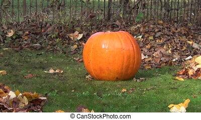 rake leaves pumpkin grass