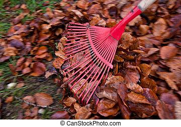 rake leaves. remove leaves. gardening