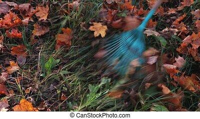 Rake on the fallen leaves