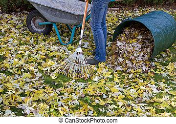 Raking autumn foliage - Woman raking autumn foliage