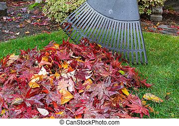 Raking Fall Leaves in Garden Yard