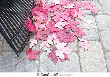Raking Fallen Red Maple Leaves
