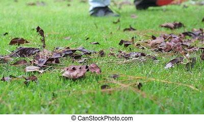 Raking Lawn Closeup Dolly - Close up, dolly shot of a man...