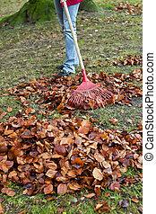 Raking leaves. Remove leaves. Gardening in the He