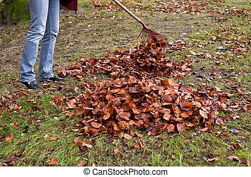 Raking leaves. Remove leaves.