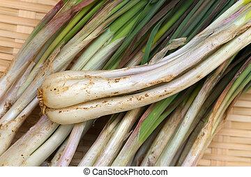 Rakkyo-Allium chinense