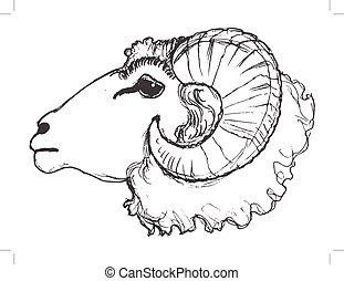 ram domestic animal - vector, sketch, hand drawn...