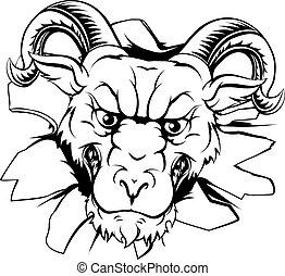 Ram mascot breakthrough