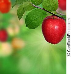rama, con, manzanas