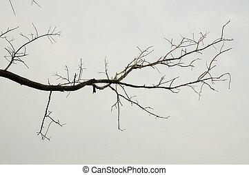 rama de árbol, muerto