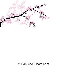 rama, de, hermoso, flor de cerezo