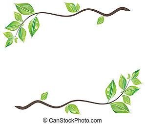rama, de, hojas verdes