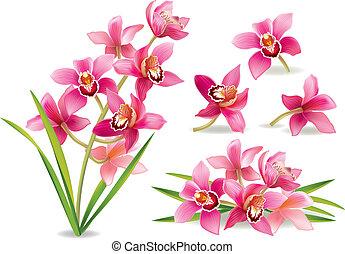 rama, orquídea