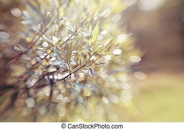 ramas, bokeh, plano de fondo, willow., resumen