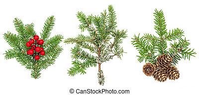 ramas, conos, árbol, decoración, bayas, navidad, rojo